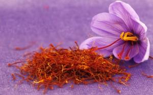 zafferano-fiore